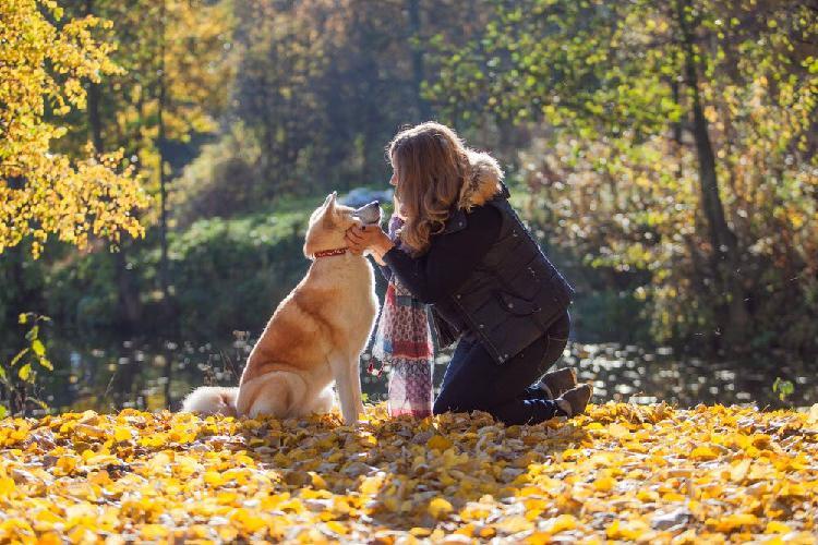 Cuidado y paseo de perros