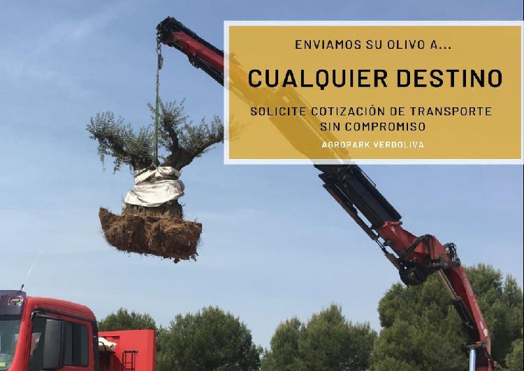 Outlet olivos centenarios + transporte