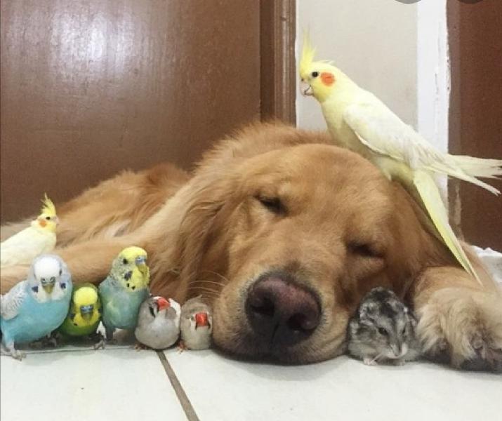 Cuidador animales take care
