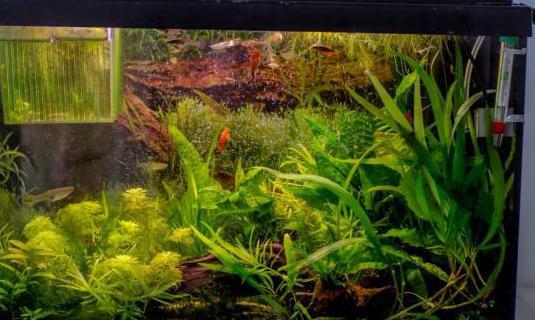 Acuario completo. ciclado plantado peces