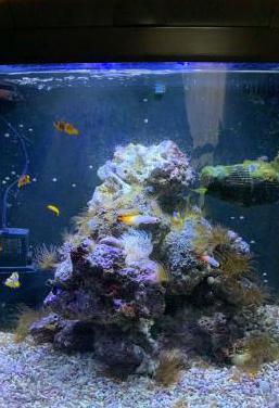 Acuario marino sera marin 130 litros
