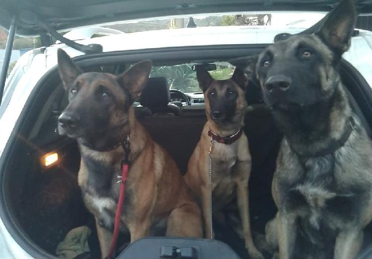 Adiestramiento canino profesional a domicilio