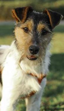 Kai perrito de 1 año en adopción