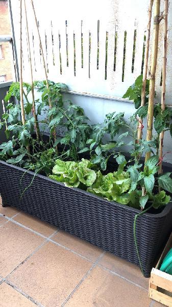Mesa de cultivo - huerto urbano keter easy grow