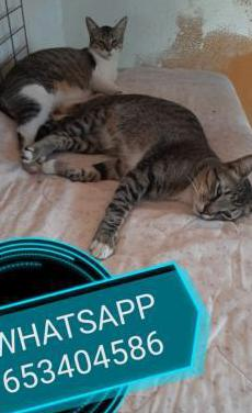 Urgente gatos en adopción