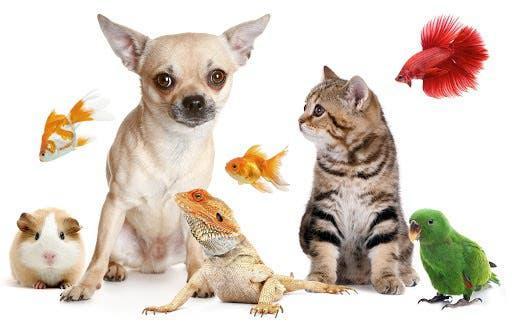 Cuidadora mascotas