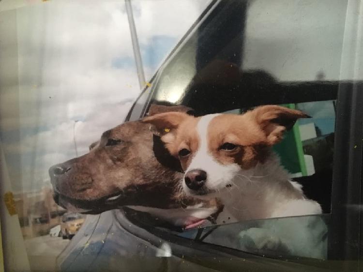 Servicio guardería y paseo de mascotas!