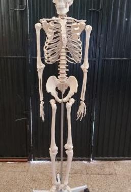 Esqueleto de resina tamaño grande