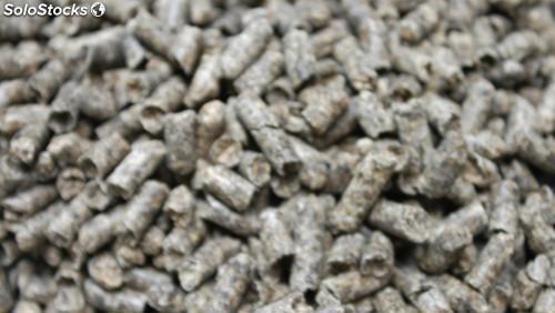 Pulpa de Remolacha granulada sacos 25kg