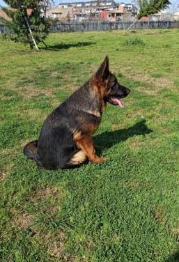 Cachorro p/a 4 meses