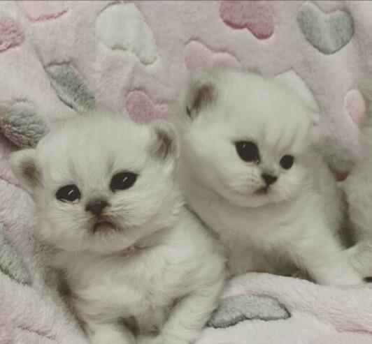 Regalo adorable de gatitos