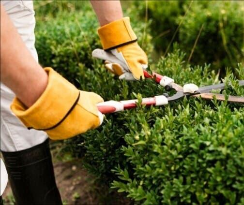 Professional gardener