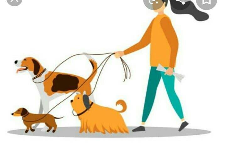 Cuido animales