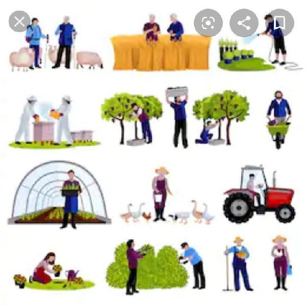 Hombre se ofrece para trabajo en el campo