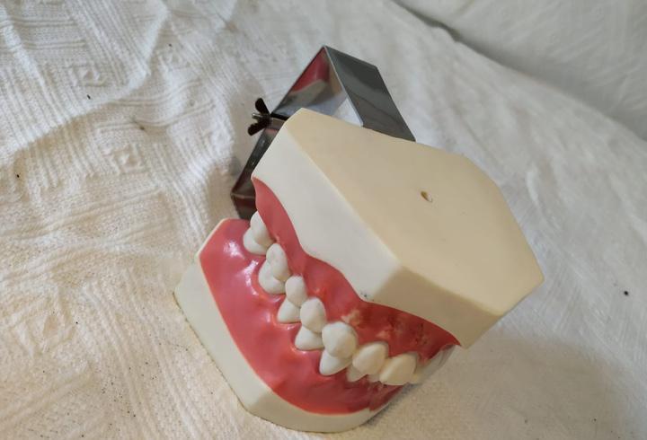 Modelo anatómico dentadura vintage