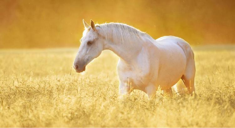 Pupilaje caballos sierra norte madrid
