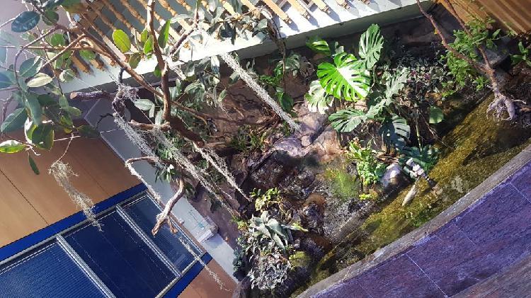 Construcción estanques cascadas artificiales