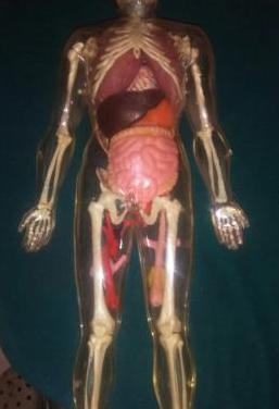 Esqueleto ..de plactico ..duro
