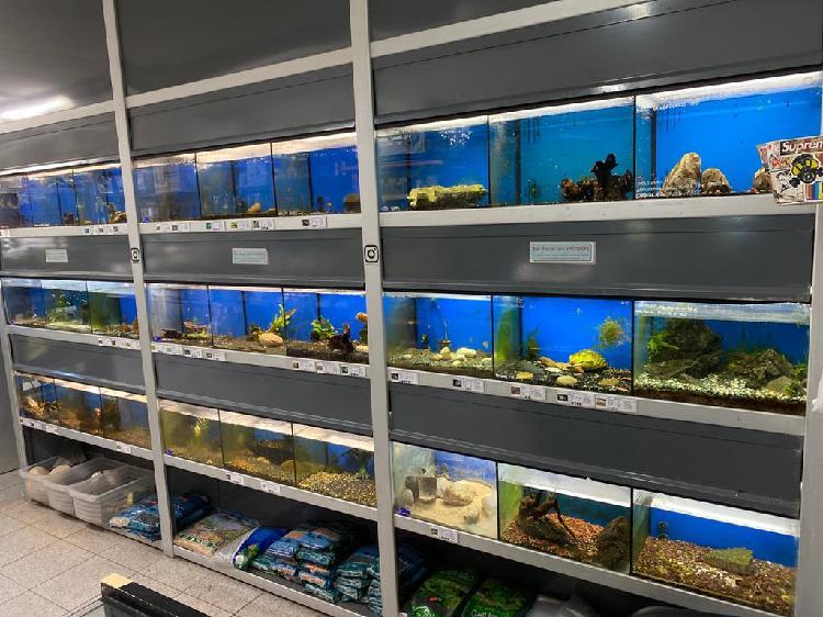 Traspaso tienda peces tropicales