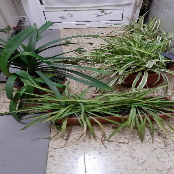 Plantas naturales.se venden hasta el sabado