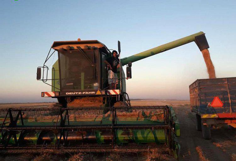 Trabajos agrícolas en toledo