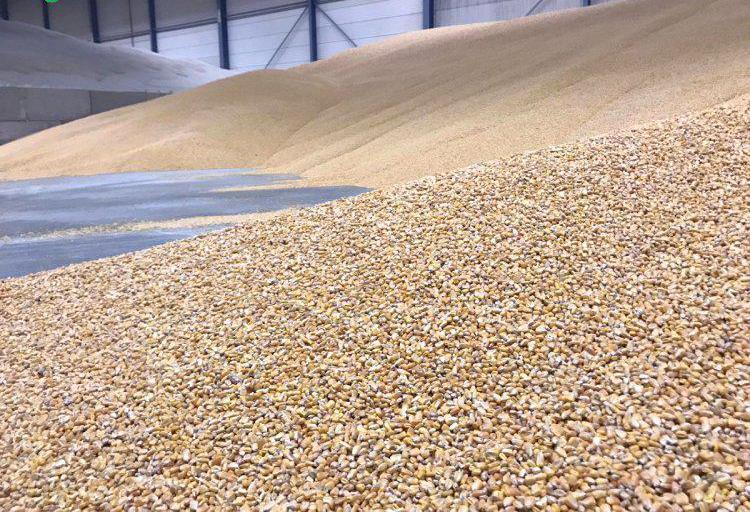 Venta de cereales ecológicos en valencia