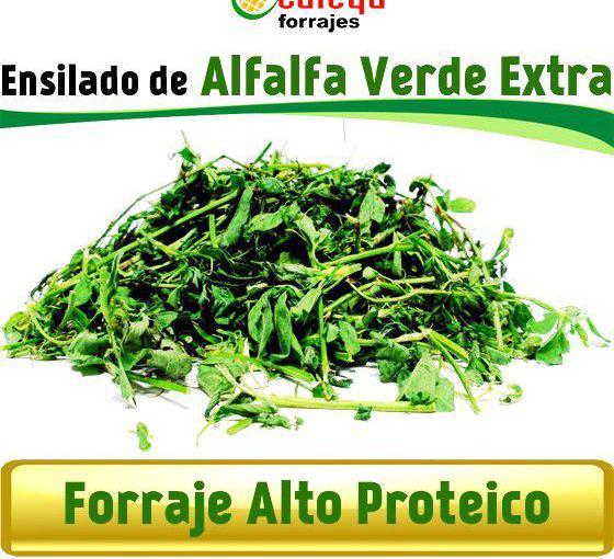 Venta de ensilado de alfalfa verde extra en badajoz