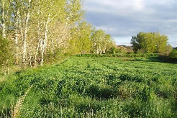 Venta de finca agrícola de cereal en soria