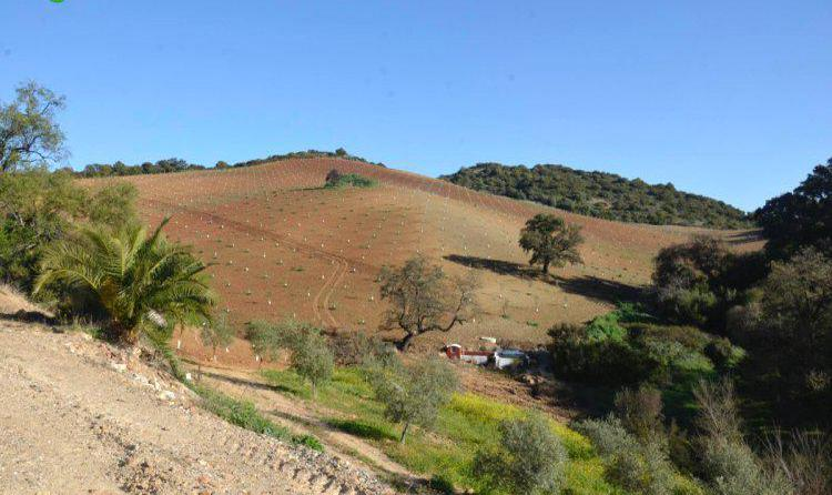 Venta de finca de olivar ecologico en cádiz