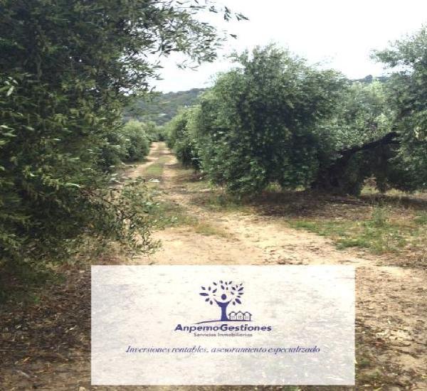 Venta de finca de olivar en sevilla