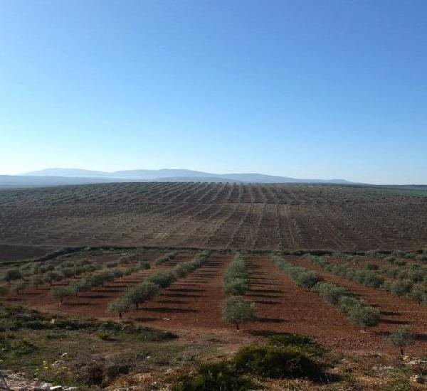 Venta de fincas para ganado en cádiz