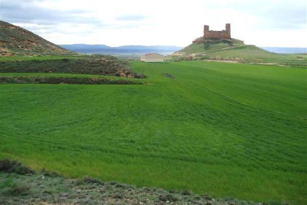 Venta de parcela agricola de secano en soria