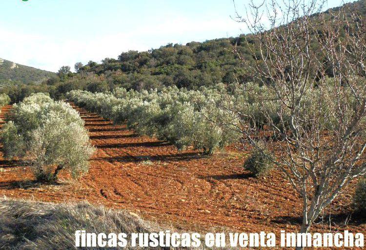 Venta de terreno de monte con olivar en ciudad real