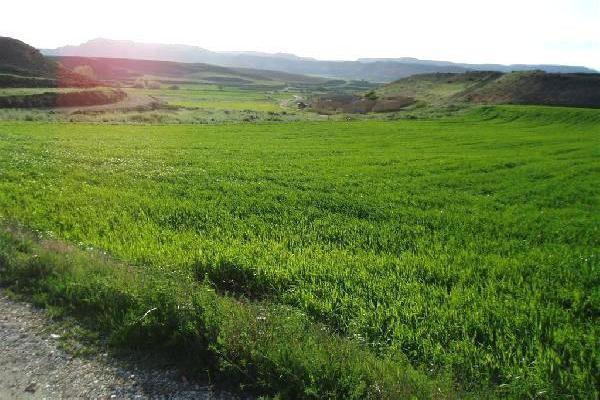 Venta de terreno de secano en soria