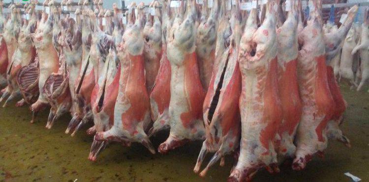 Compra de ovejas y cabras al por mayor en madrid