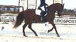 Venta de caballo pura raza española en cuenca
