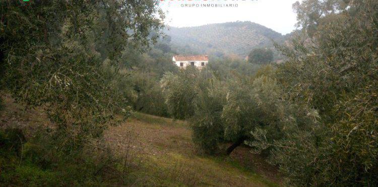 Venta de olivar con chalet y cortijo antiguo en córdoba