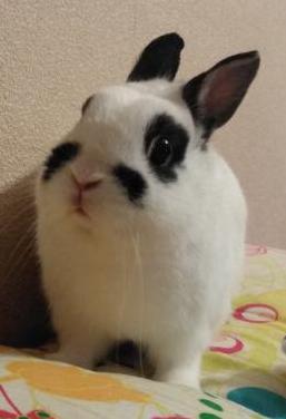 Conejo toy más jaula grande