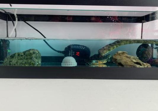Acuario con tortugas