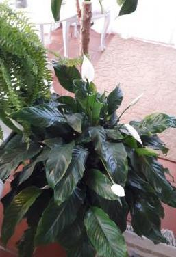 Plantas interior y exterior