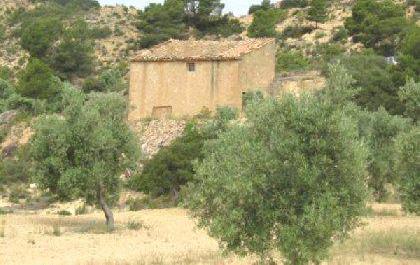 Venta de olivar con masia en teruel