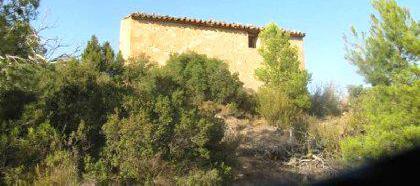 Venta de terreno con pinar, almendros y olivos en tarragona