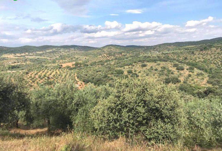 Venta de Finca rústica olivar con casa en Córdoba