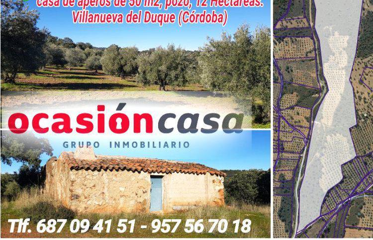 Venta de Olivar con pozo y casa de aperos en Córdoba