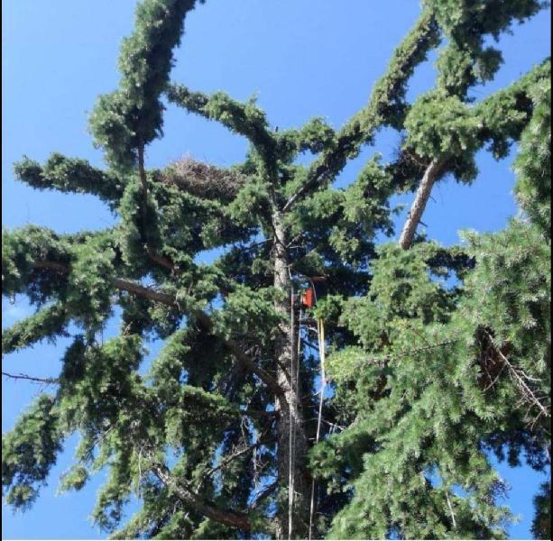 Control de cotorra y de paloma. retiramos nidos