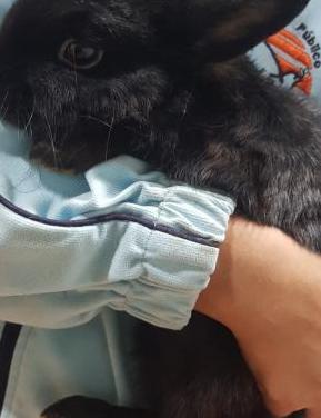 Conejito chispa, 6 meses, adopcion