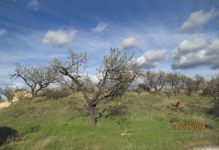 Venta de terreno de secano en tarragona