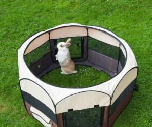 Parques pequeños animales. liquidación stock