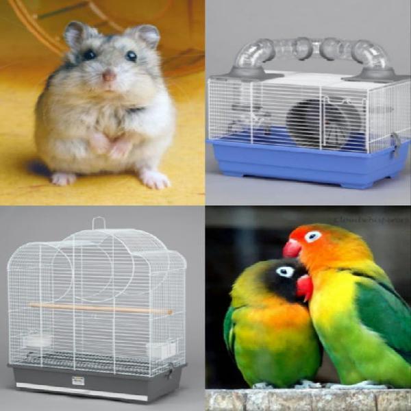 Cuidado de animales de jaula
