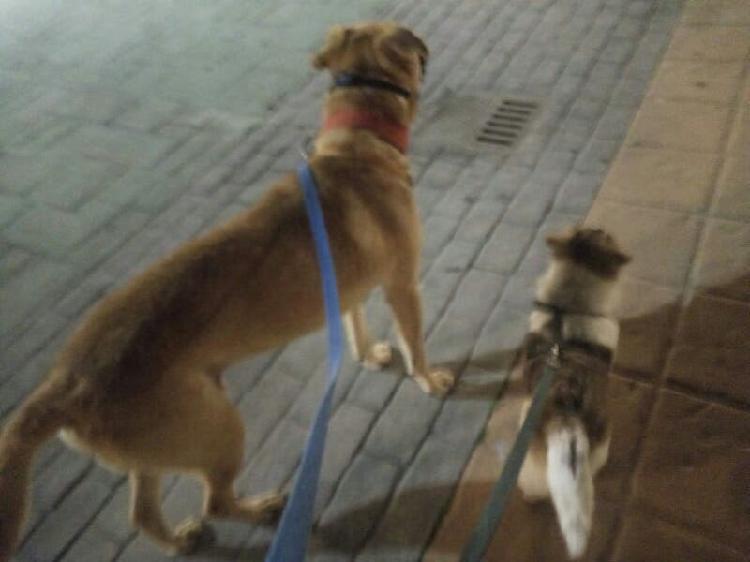 Cuidado de animales paseos